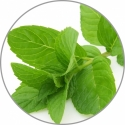 Aroma essence 10 ml Peppermint